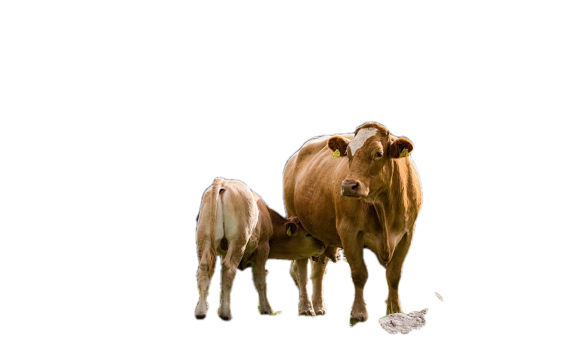 Tips to Keep Your Livestock Safe and Healthy
