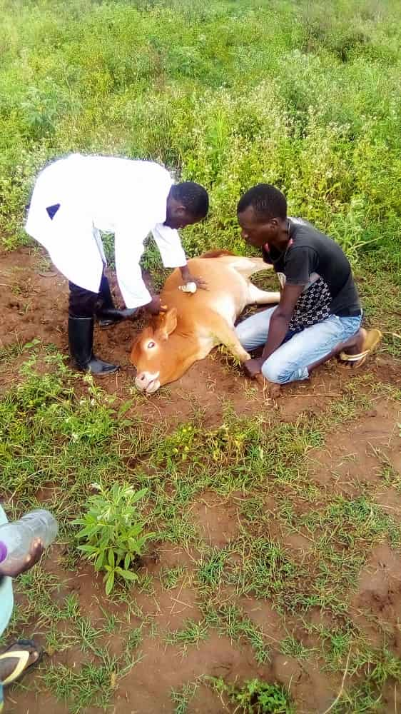 prevention of transmission of animal diseases to people.